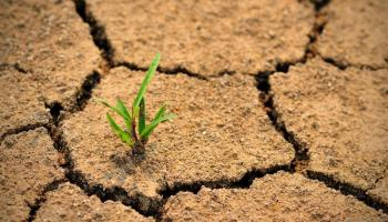 dry cracked earth - single shoot
