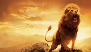 bold lion